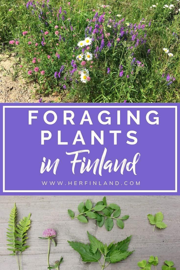 Learn how to do foraging in Finland and 6 edible you can pick! #foraging