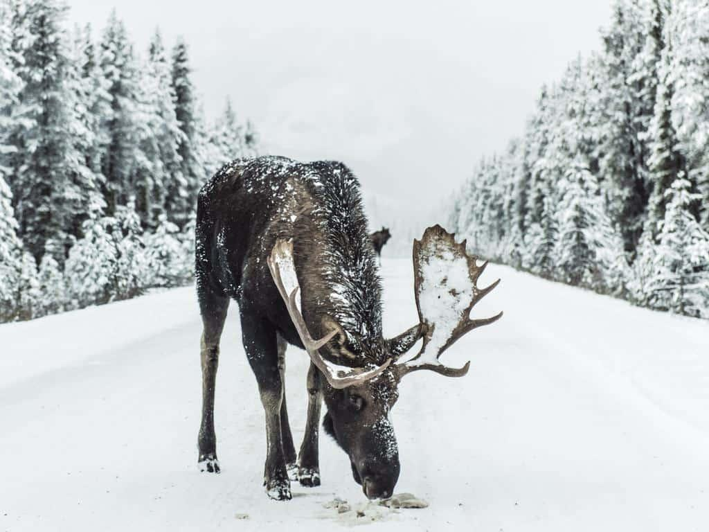 Driving in winter Finland is safe with winter tires. You need to be careful of elks all year round.