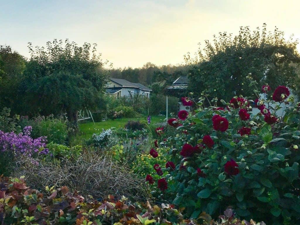 Things to do in Helsinki: Visit an allotment garden - Her Finland blog