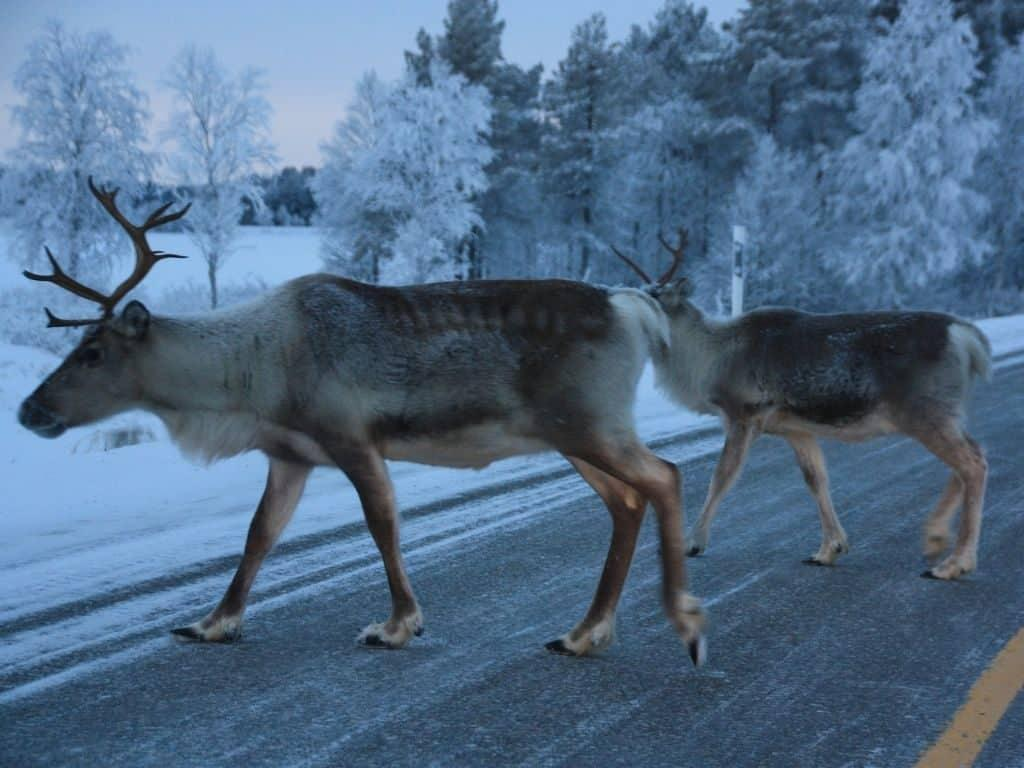 Facts about Finland include not asking too detailed questions about reindeer!
