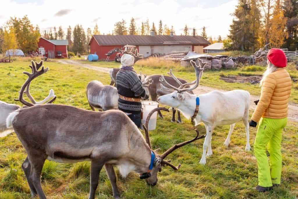 2 woman with 6 reindeers on a farm