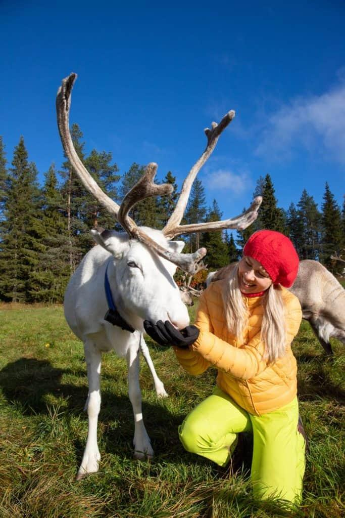 Woman feeding a white reindeer